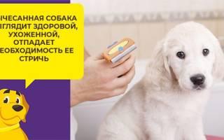 Как правильно пользоваться фурминатором для собак?