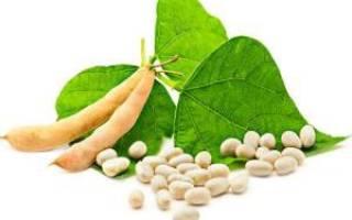 Чем полезна белая фасоль для женщин?
