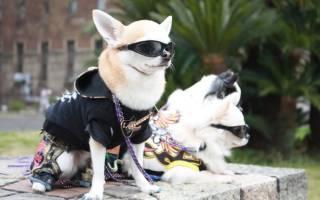 Японские породы собак с фотографиями и названиями – пес японец ину