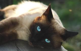 Гестренол таблетки для кошек инструкция по применению