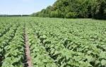 Почвенный гербицид для подсолнечника