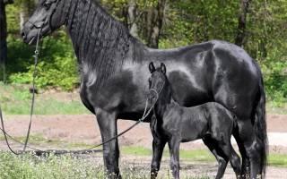 Сколько длится беременность у лошадей — сколько кобыла вынашивает жеребенка?