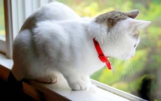 Как действует ошейник от блох для кошек?
