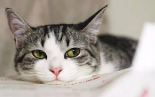 Нехватка кальция у котят симптомы: гиперкальциемия у кошек Ростов