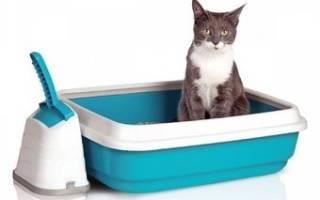 Как выбрать лоток для котенка – виды лотков для кошек