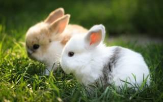 Сколько стоят кролики домашние