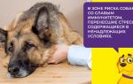Короновирусная инфекция у собак симптомы и лечение: коронавирус у щенков