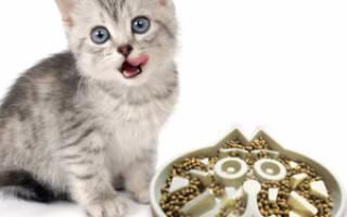 Еда для кошки в домашних условиях: правильный рацион для кота