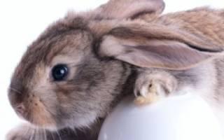 Можно ли ячмень кроликам?