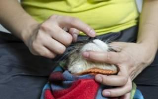 Энтерофурил коту при поносе дозировка