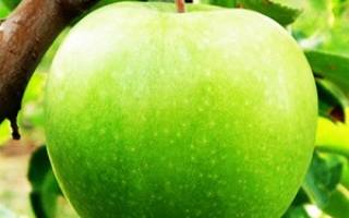 Яблоня гренни смит описание фото отзывы
