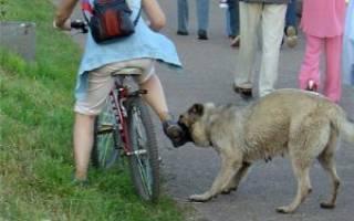 Отпугиватель собак как работает