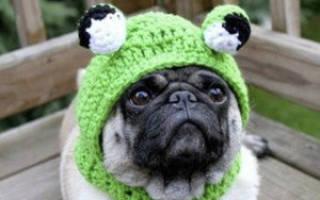 Связать шапку для собаки своими руками, шапочка для собачки спицами