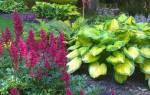 Цветы для полутени цветущие все лето, растения для теневого сада
