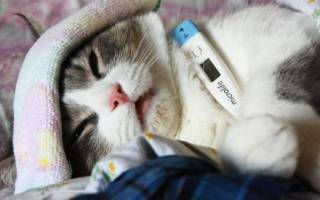 Глобфел 4 для кошек инструкция как колоть, сыворотка для котов