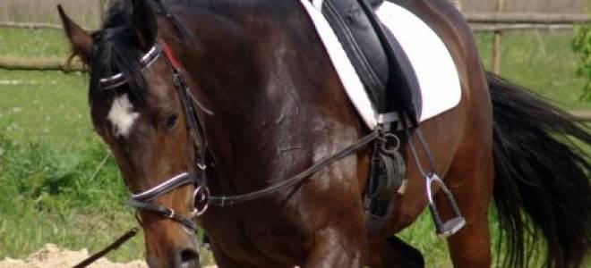 Как сделать седло для лошади своими руками?