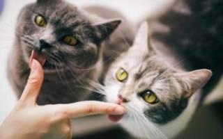 Как примирить двух котов в одном доме, кошки вместе