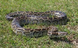 Едят ли змеи лягушек, кто есть змей?