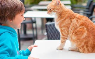 Как играться с котенком — как играть с котом?