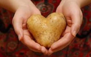 Сорта картофеля белорусской селекции фото и описание