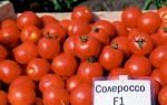 Томат солероссо характеристика и описание сорта