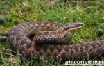 Сколько живут змеи в домашних условиях, продолжительность жизни змей в природе