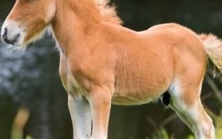 Лошадь и пони фото, мини кони