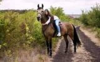 Лошади на авито Ростовская область