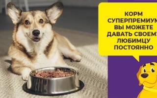 Нормы кормления собак сухим кормом
