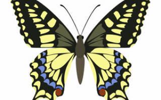 Чем кормить гусеницу в домашних условиях зимой, махаон бабочка фото и описание