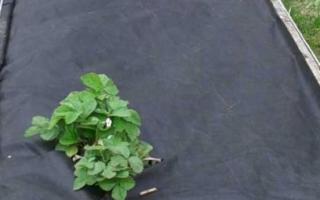 Черный укрывной материал от сорняков как использовать, ткань для огорода
