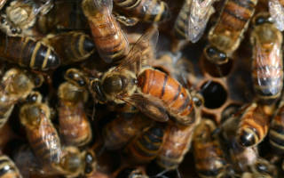 Противороевые приемы в пчеловодстве