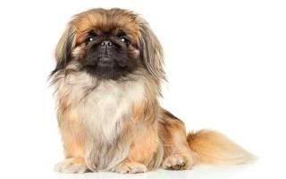 Дорогие собаки породы фото и названия