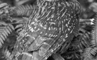 Исчезнувшие птицы фото и названия