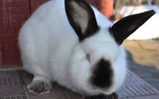 Как выращивать кроликов на даче?