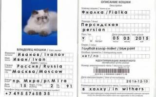 Как сделать ветеринарный паспорт кошке?