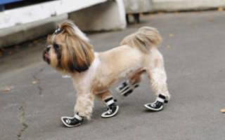 Как сделать ботинки для собаки?