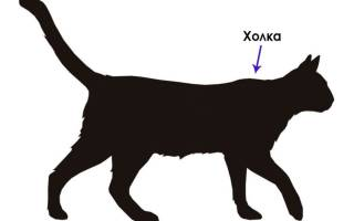 Где у кошки холка капли от блох?