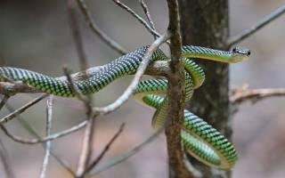Украшенные древесные змеи, картинки летающих змей