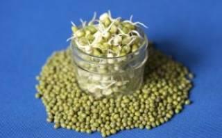 Можно ли есть проросшую фасоль, пророщенные семена фасоли