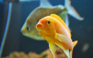 Как понять что рыбка умирает в аквариуме?