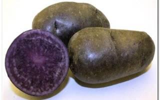 Картофель с фиолетовой мякотью описание сорта фото, трюфельная картошка