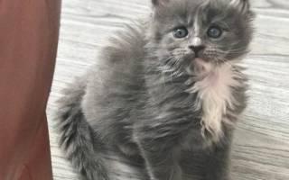 У котенка запах изо рта, что делать?