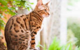 Лоток для кошек с сеткой как использовать