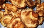 Грибы коровники фото и описание как готовить, маринованные валуи на зиму в стеклянные банки