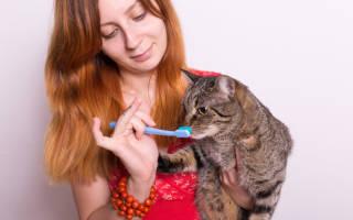 Чем чистить зубы коту в домашних условиях?