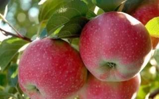 Яблоки сорта лобо фото и описание