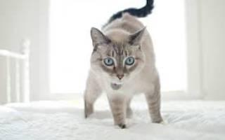 Как отучить котенка писать на кровать — кошка гадит на постель, что делать?