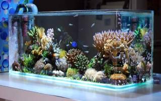 Какое оборудование нужно для морского аквариума