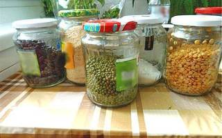 Как уберечь фасоль от жучков зимой – срок хранения фасоли сухой